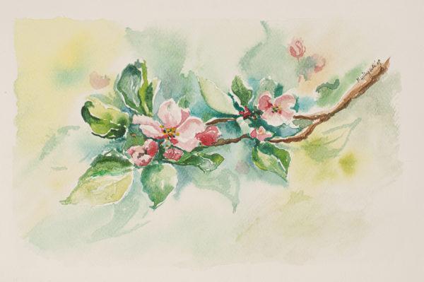 obraz akwarelowy kwiaty jabłoni www.polanamontessori.pl